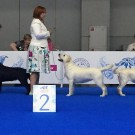 World Dog Show -2016 (Москва)