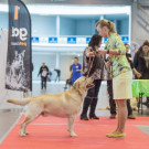 National dog show, St.Petersburg
